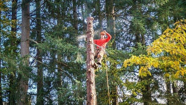 tree-service-3472280_640 (1)